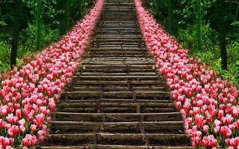 Stairway_to_Heavon_Flower_Tulips_ Kyoto_Japan